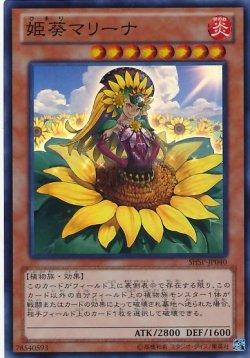画像1: 【スーパー】姫葵マリーナ